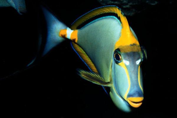 horaires aquarium barcelone