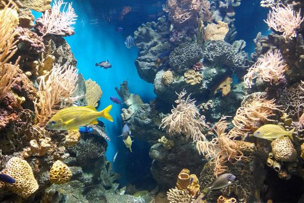 aquarium barcelone
